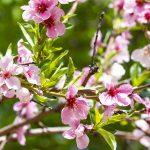 Anthophobie – Angst vor Blumen – Symptome, Behandlung, Therapie